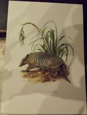N°43 Mammal Poster the Armadillo Poyou cuirass cartilaginous or bone America Tro