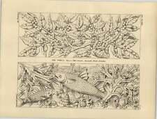 1878 paneles de Algas Peces follaje Roble friso Escultura De Laurel