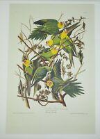 """John James Audubon Carolina Parrot Frameable Print 10"""" x 15"""" Plate 26"""