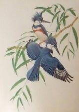 VINTAGE LITHOGRAPH  BIRDS PRINTS BY ATHOS  MENBAbONI FIRST ED 1950