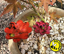 Alimentatore API CONFEZIONE DA 2 poco profondi Bee Porta Mangime per il vostro giardino-Honey Bee Bombo
