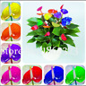 Mix Anthurium 100 Pcs Seeds Bonsai Indoor Plants Flowers Pots Garden Home NEW N