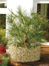 Pflanzen Hochbeete Gunstig Kaufen Ebay