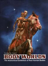 Body Worlds The Original Exhibition of Real Human