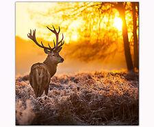 Bild auf Leinwand als Kunstdruck 40 x 40 cm Hirsch im Sonnenuntergang Wanddeko