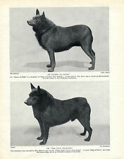SCHIPPERKE TWO NAMED CHAMPION DOGS OLD ORIGINAL DOG PRINT FROM 1934