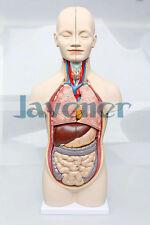 Human Anatomical Body Integral Organ Distribution Viscera Medical Teach Model