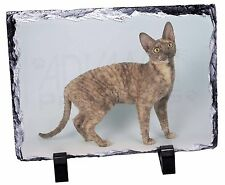 Cornish Rex Cat Photo Slate Christmas Gift Ornament, AC-39SL