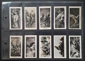 John Sinclair 1924 BIRDS - complete set of 48 cigarette cards