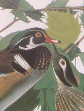 Woodduck Audubon Bird Print Picture Poster Art