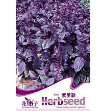 Fd1265 Chinese Herb Purple Sweet Basil Seed Ocimum Gratissimum *1 Pack 50 Seeds*