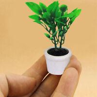 01.12 Puppenhaus Miniatur Grünpflanze In White.Pot Garten Innenhof Yard Acces