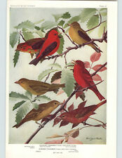1936 Color Bird Plates Louis Agassiz Fuertes Tanager Scarlet Swallow Martin Tree