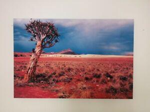 Canvas Picture - Desert Scene