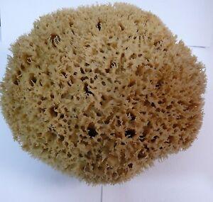 TERAA !!! Honeycomb Sea Sponge 11''= 28.5cm Greek LUXURIOUS- SPECIAL - ONLY ONE