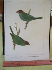Vintage Print,SO.AMERICAN TANAGER,Pl.19,U.S.Astrological Expedition,1855,Chromo