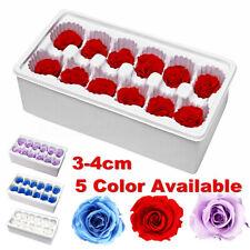 12pcs Romantic Preserved Forever Rose Flowers 3-4cm Wedding Valentine's Day  US