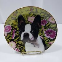 All Ears Collectible Plate Boston Terrier By Dan Hatala Danbury Mint #B918