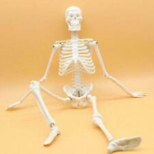 45cm Medical Anatomical Human Anatomy Skeleton Model Toy Puppet Anatomical H5P7
