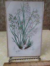 Vintage Print,TUFTED HAIR SOFT GRASS,Plate254