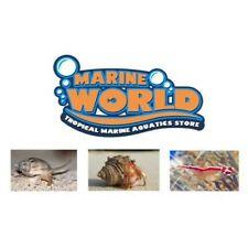 10 Hermit Crabs, 1 Cleaner Shrimp, 10 Nassarius Snails Marine Cuc