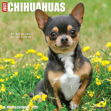 Just Chihuahuas (dog breed calendar) 2021 Wall Calendar (Free Shipping)