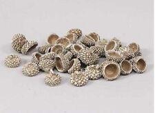 Acorn caps-pot pourri-décoratif - 100g sac-blanc