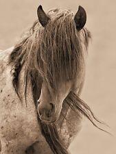 Freedom Lisa Dearing Horse Art Print 20x26
