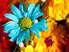 PHOTO MACRO NATURE PLANT FLOWER YEN PETALS BLUE GREEN ART POSTER PRINT LV6168