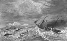 ALASKA. Bering Sea. Midst of Leviathan 1880 old antique vintage print picture