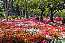 BEAUTIFUL PARK FLOWERS CANVAS PICTURE #52 STUNNING LANDSCAPE NATURE A1 CANVAS