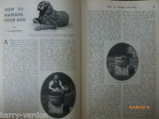 Fishes of Sea Managing Your Dog Channel Swimming Old Illustrated Articles 1907