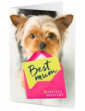 Yorkshire Terrier dog delivers special BEST MUM Mother's Birthday greeting card