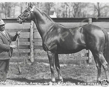 MAN o' WAR HORSE RACING PREAKNESS BELMONT STAKES CHAMPIONS 8X10 PHOTO