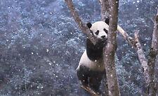 Incorniciato stampa-GIOVANE PICCOLO PANDA ORSO in piedi in una struttura (PICTURE POSTER animale)