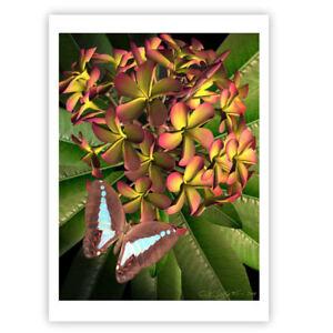 © ART- Or frangipani Plumeria Butterfly Original Flower illustration Print by Di