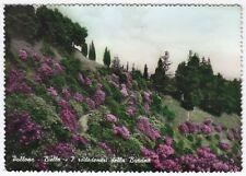 0168 BIELLA POLLONE - BURCINA - RODODENDRI FIORI Cartolina FOTOGR viaggiata 1957