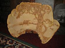 Unusual Mushroom Mold Fungus Art-Tree Bark-Country Farm Painted On Bark-Large