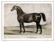 LITHOGRAPHIE ANCIENNE, de Castille, Rainbow, cheval