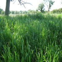 Sweet Grass Fragrance Oil Candle/Soap Making Supplies *Free Shipping *