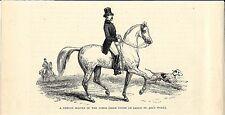 Stampa antica ADDESTRATORE di CAVALLI francese 1875 Old antique Print Horses
