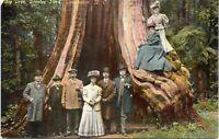 Big Tree Stanley Park Vancouver British Columbia Canada 1910 Postcard