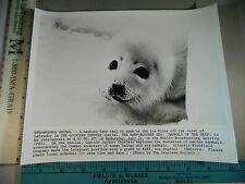 Rare Original Vtg Cousteau Odyssey Warm Blooded Sea Mammals Baby Harp Seal Photo
