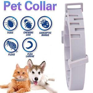 Adjustable Pet Anti Flea Tick Neck Collar For Dog Cat 8 Months Safe Protection