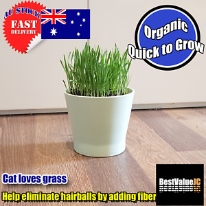 Cat Grass Seeds Organic Approx. 20 grams