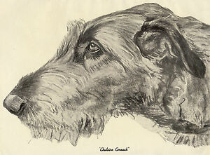 IRISH WOLFHOUND HEAD STUDY NAMED DOG OLD SEPIA ART PRINT FROM 1934