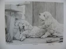 Clumber Spaniel Print - Mike Sibley - Ltd.Edn. 34/850
