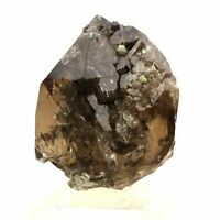 Quartz Smokey 221.0 Ct. Solid of / the Mont-Blanc, France