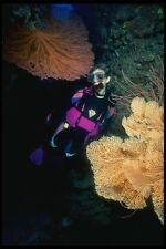 156080 Diver With Pacific Sea Fans A4 Photo Print