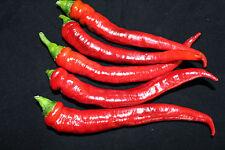 Rare Byadagi chili pepper 40+ fresh organic & isolated seed for 2018.